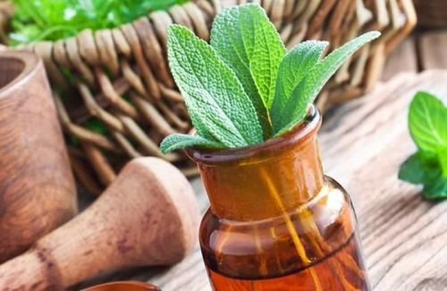meilleures-plantes-medicinales