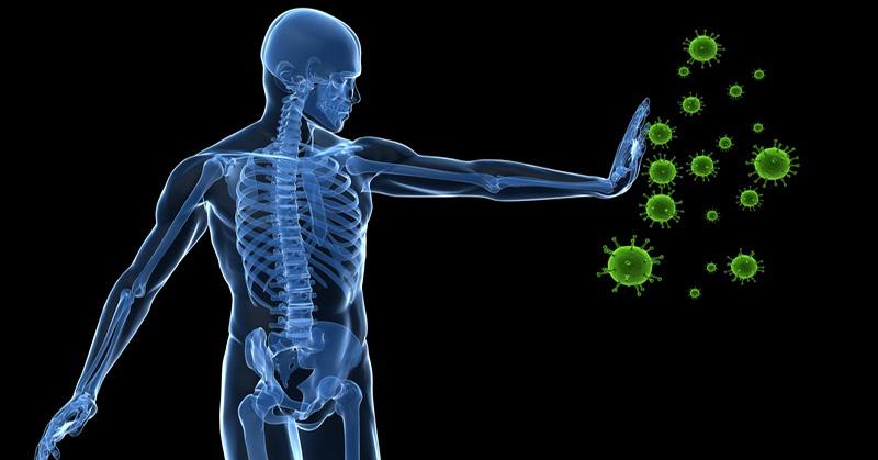 systeme-immunitaire2