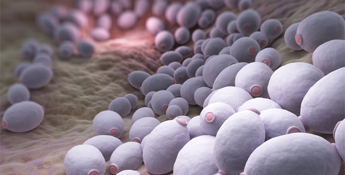 candida-albicans_690x350-690x350