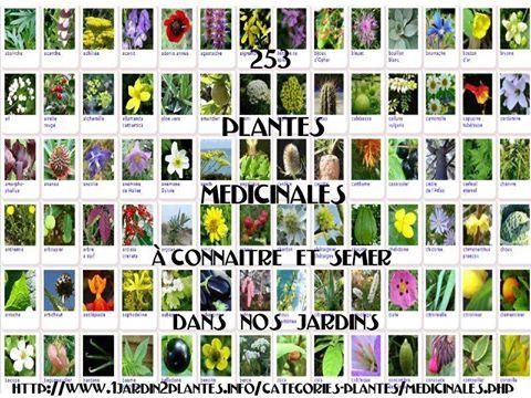 plantes-medicinales2