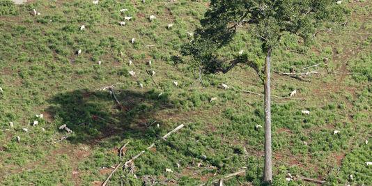 La déforestation progresse en Amazonie.