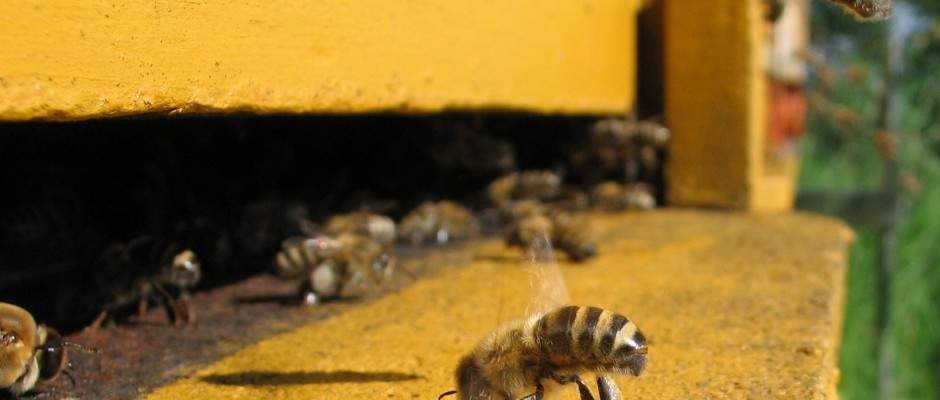 Honeybee-cooling_cropped-940x400