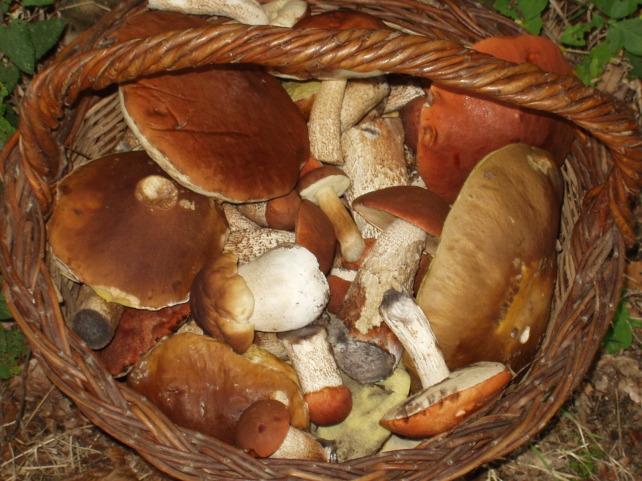 Le rôle des champignons dans notre santé