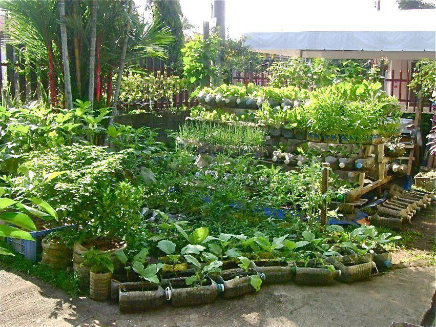 12 M 233 Thodes Pour Cultiver Des Plantes Partout La