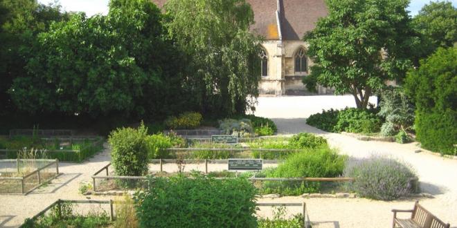 Le jardin médicinal, ses plantes vertueuses et officinales