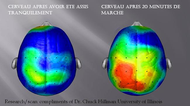 cerveau-marche