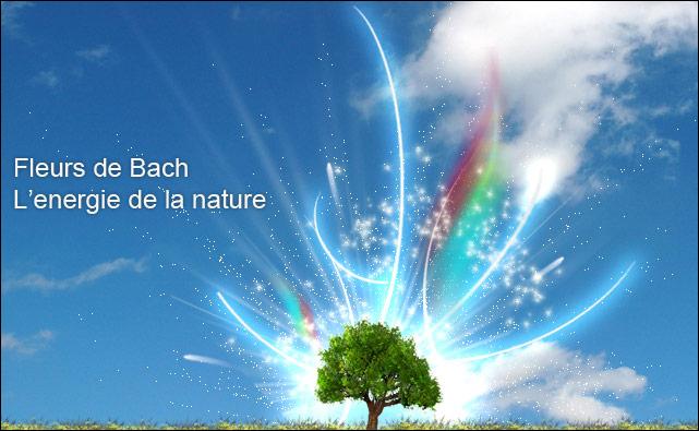 fleurs-de-bach5