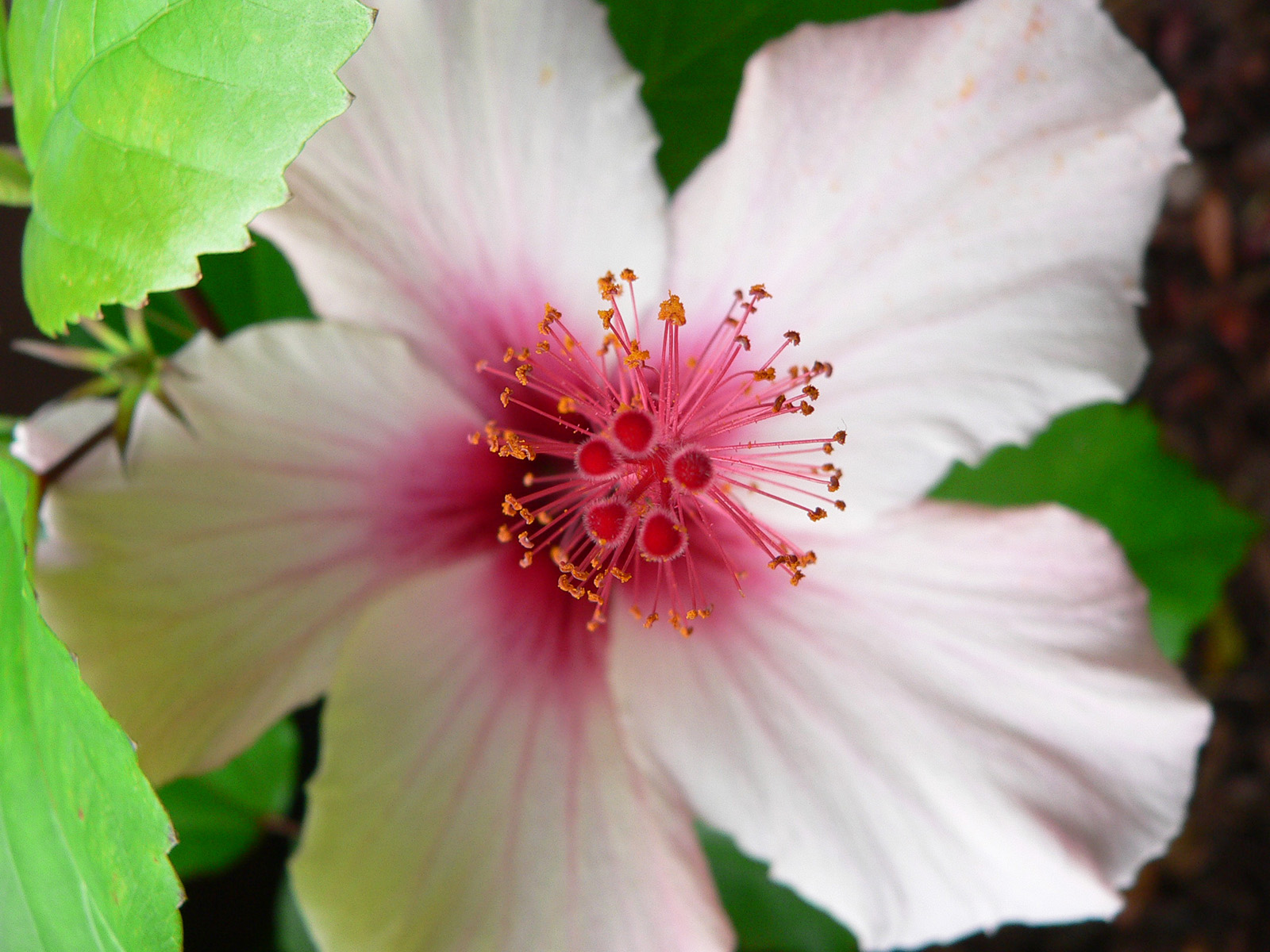 7 bienfaits des fleurs de bach sant nutrition. Black Bedroom Furniture Sets. Home Design Ideas