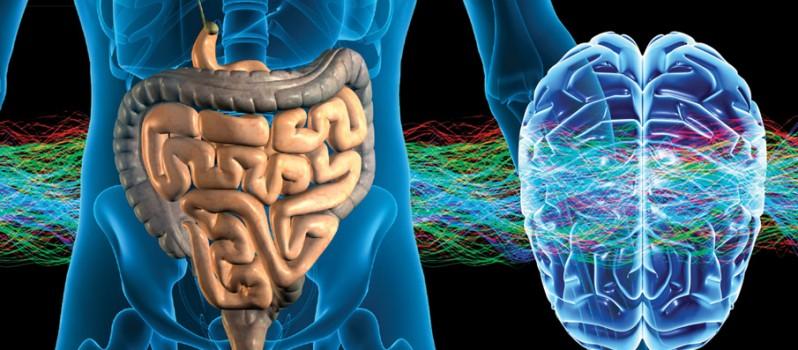 human-gut-brain-798x350