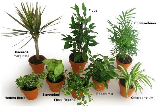 Liste des plantes dépolluantes qui purifient l'air de nos intérieurs - Santé Nutrition