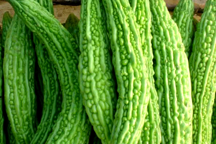 Melon-Amer