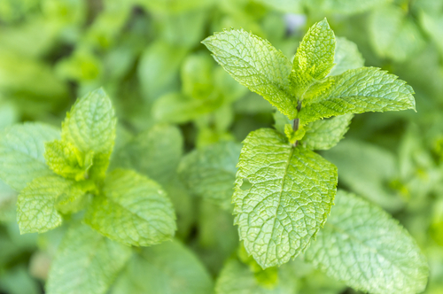 10 plantes qui attirent des nergies positives sant nutrition. Black Bedroom Furniture Sets. Home Design Ideas