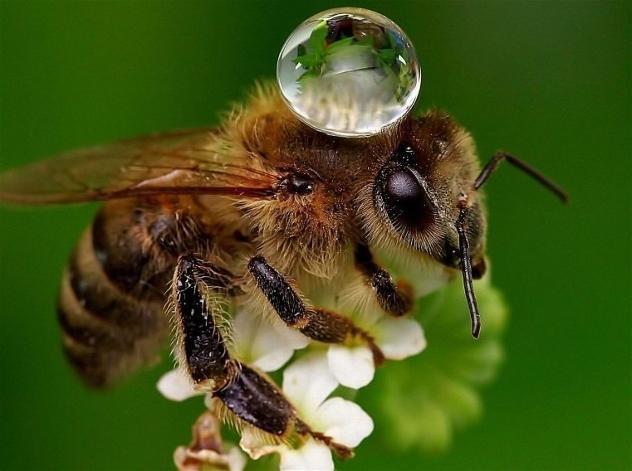 abreuvoir-abeilles2