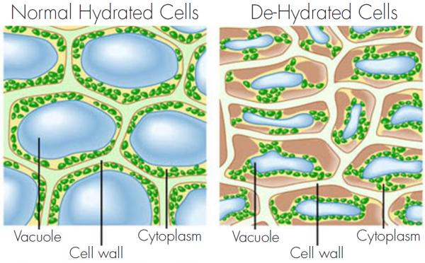 cells-e1418052124943