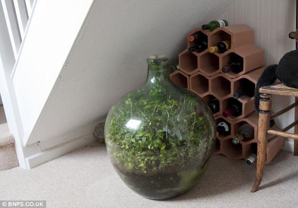 jardin-bouteille2