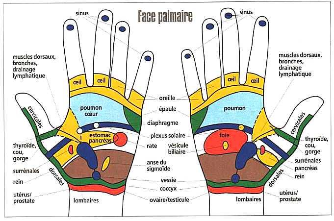 mains-face-palmaire