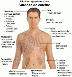Principaux_symptômes_dune_surdose_de_caféine-280x300