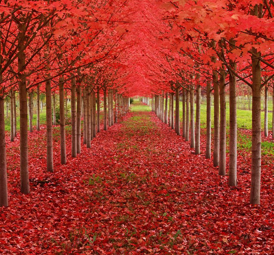 arbres12
