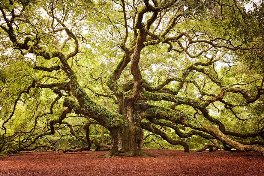 arbres8