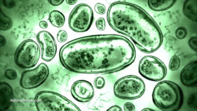 Bacteria-Germs-Cells