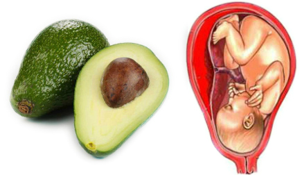 avocados-cervix-perfect