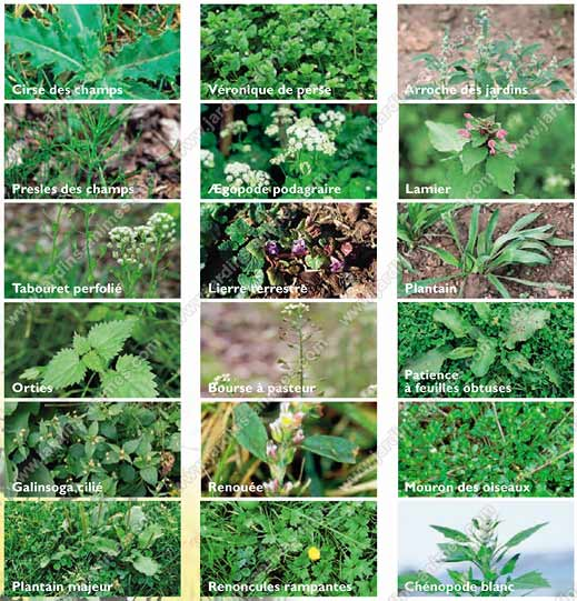 Voici comment vous pouvez vous d barrasser des mauvaises herbes sant nutrition - Desherbant bicarbonate vinaigre ...