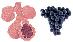 grapes-lungs-perfect