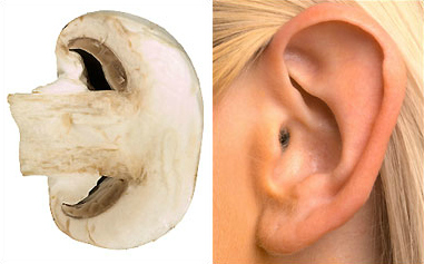 mushroom-ear2