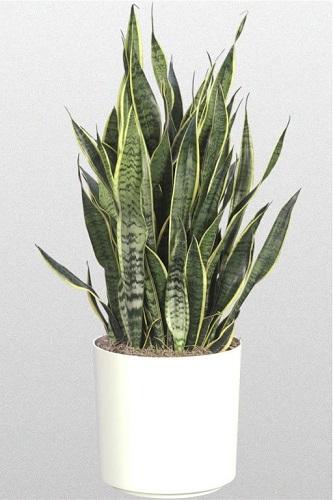 5 plantes pour votre chambre pour vous aider mieux for Plante a mettre dans une chambre