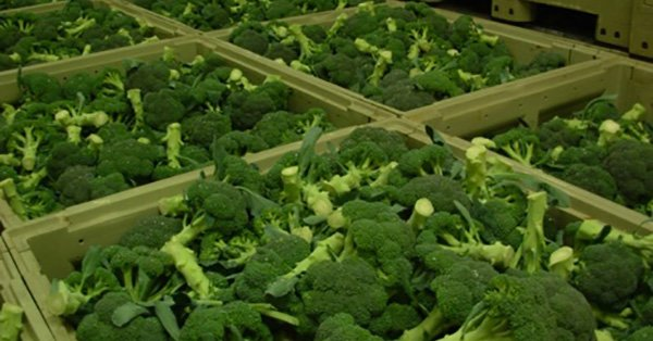 broccoli-cancer2