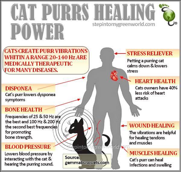 cat-purr
