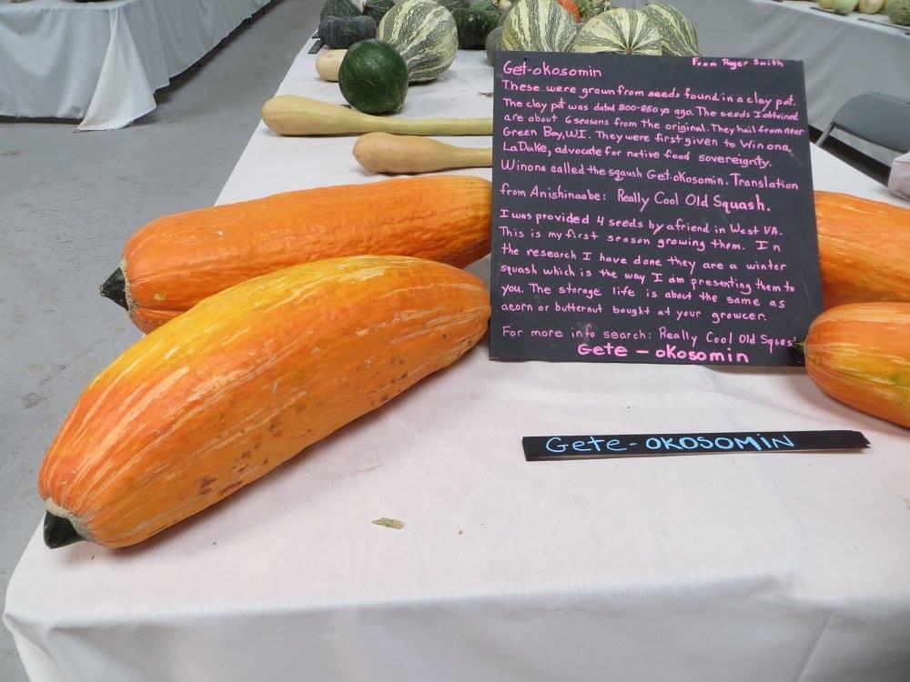 graine-legume-800-ans-4
