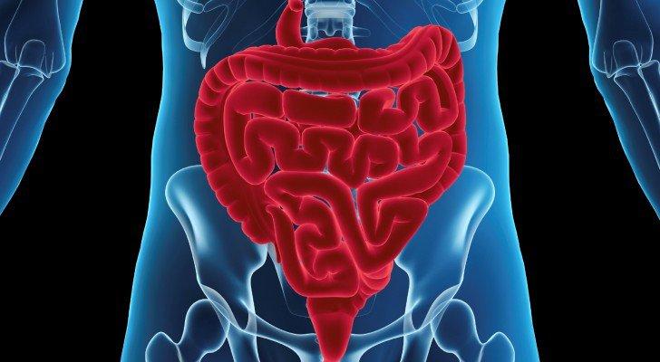 systeme-digestif