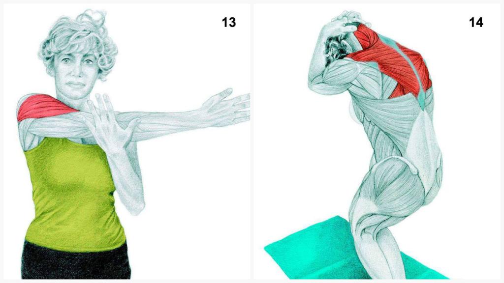 Savez vous quel muscle vous êtes en train d'étirer