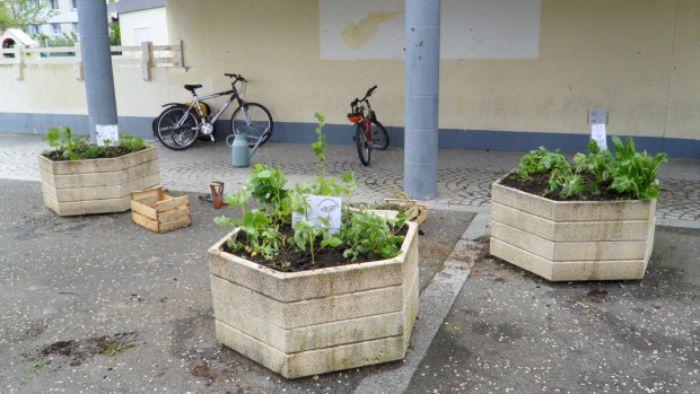 incroyables-comestibles-potagers-urbains-legumes-gratuits-2-1