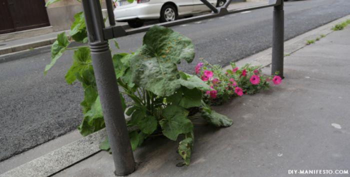 incroyables-comestibles-potagers-urbains-legumes-gratuits-3-1