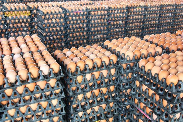 monoprix-ne-vendra-plus-d-oeufs-de-poules-en-batterie-3-750x500