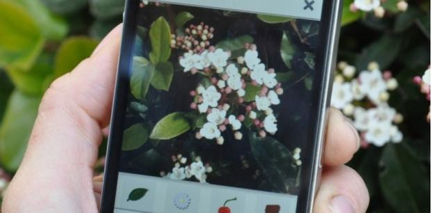 shazam-plantes-plantnet-3