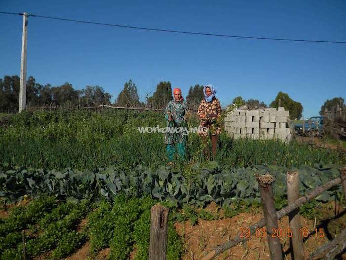 brachoua-permaculture-maroc-developpement-durable-5