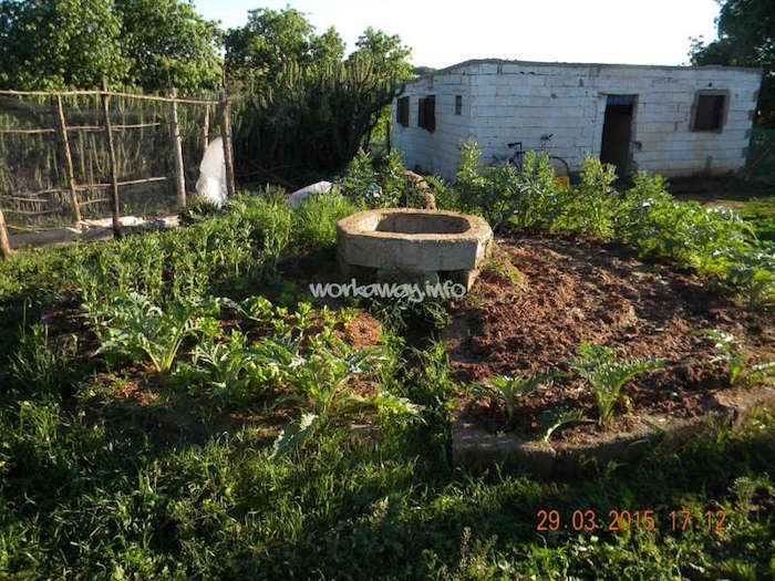 brachoua-permaculture-maroc-developpement-durable-6