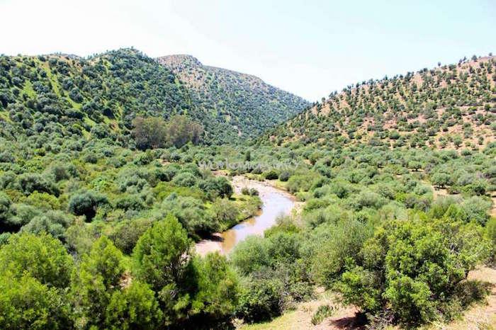 brachoua-permaculture-maroc-developpement-durable-7