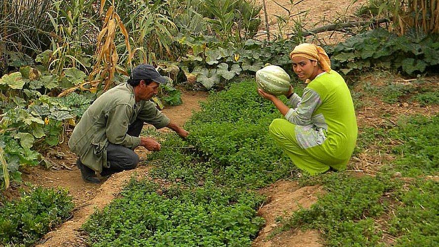 brachoua-permaculture-maroc-developpement-durable-une