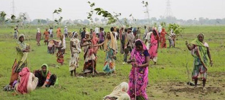 inde-uttar-pradesh-50-millions-arbres-24-heures-record-03