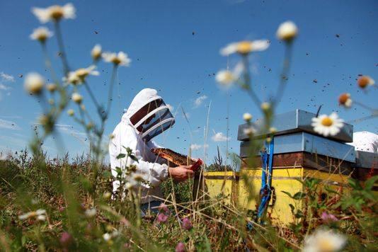 pesticides-bannis2