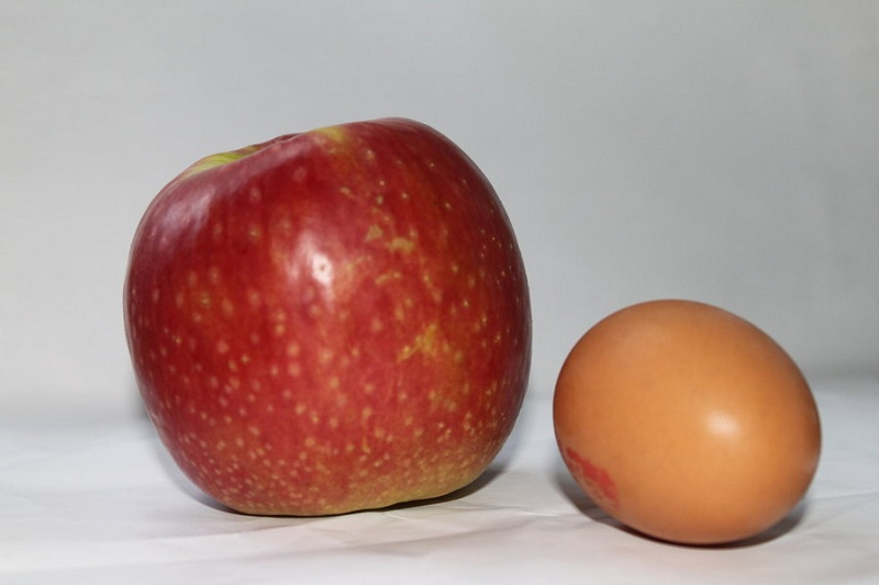 oeuf-pomme