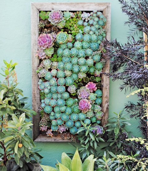 54eb5c7f781ac_-_succulent-plant-garden-how-to-plant-vertical-garden-0412-xln
