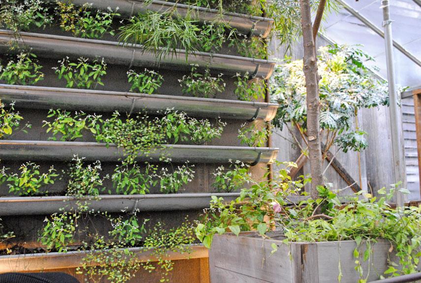 54eb5c80b5270_-_rain-gutter-garden-how-to-plant-vertical-garden-0412-xln