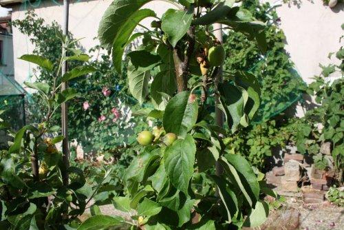 arbres_fruitiers_simongouin-b6eb8