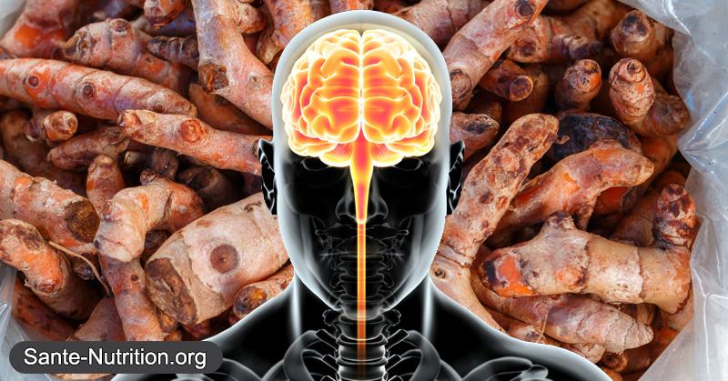 curcuma-cerveau2