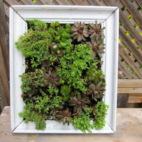 gallery-1430166445-frame-vertical-garden